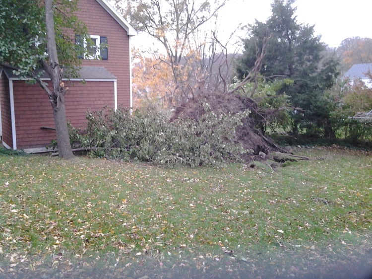 Some of the cleanup work that awaits us this weekend in the back yard. This is the ass end of our neighbor's tree, upended during the storm. It managed to avoid hitting their house, but left a huge crater in the lawn. Basil is thinking we should install a hot tub there...
