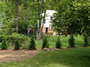 The back perimeter of the yard was previously an overgrown mess of pachysandra, small bushes and weeds.