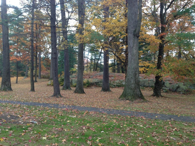 Dwindling fall display. Bruce Park, Greenwich.