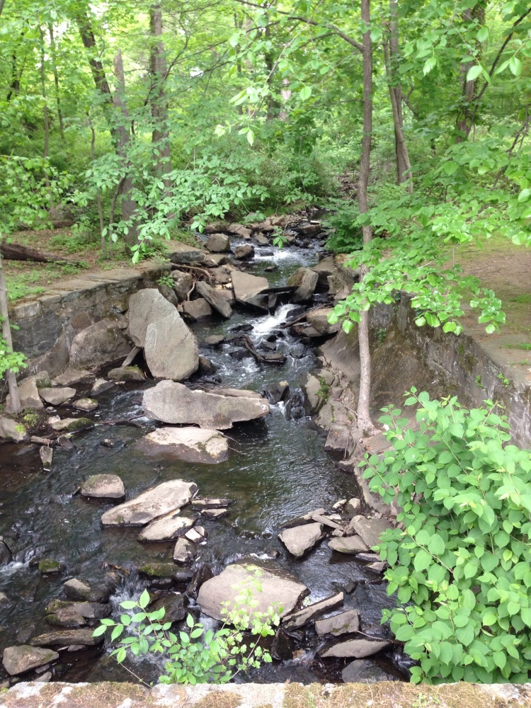 The creek on the corner of Greenwich High's campus comes to life.